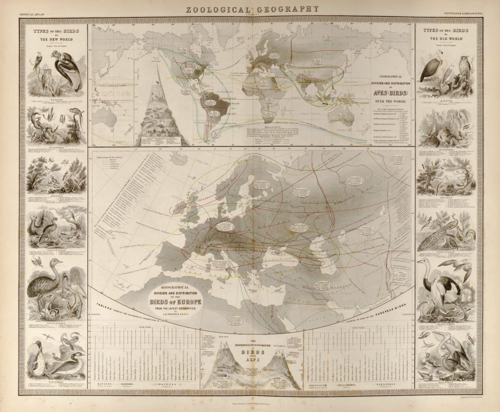 Орнитологическая карта Европы, 1848 г.